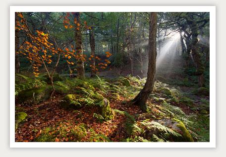 Yarnliff Wood
