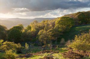 Looking Across Hay Wood