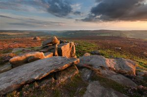 Heather on Over Owler Tor