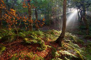 Yarncliffe Wood