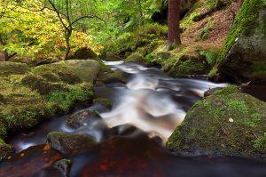 Wyming Brook Downstream