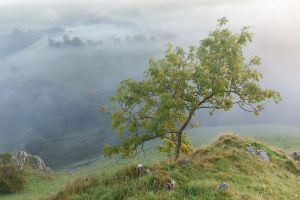 Peaseland Rocks  - Tree